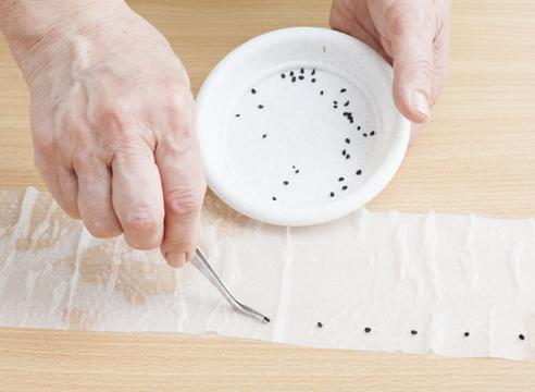 Разложите семена на расстоянии 4-5 см, отступая от края полоски 1-1,5 см