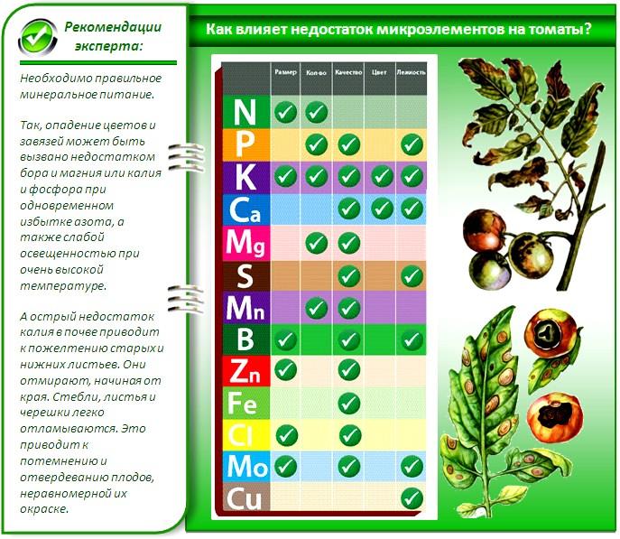 Как влияет недостаток микроэлементов на томаты