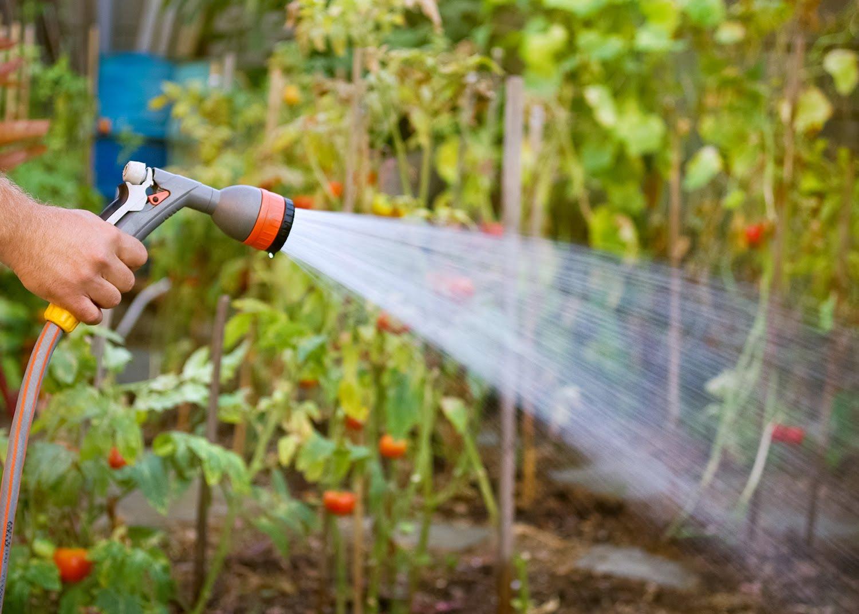 Механическое удаление белокрылки напором воды