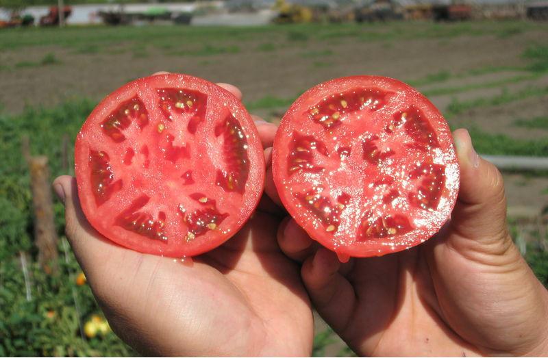 О собственноручного сбора семян помидоров много преимуществ