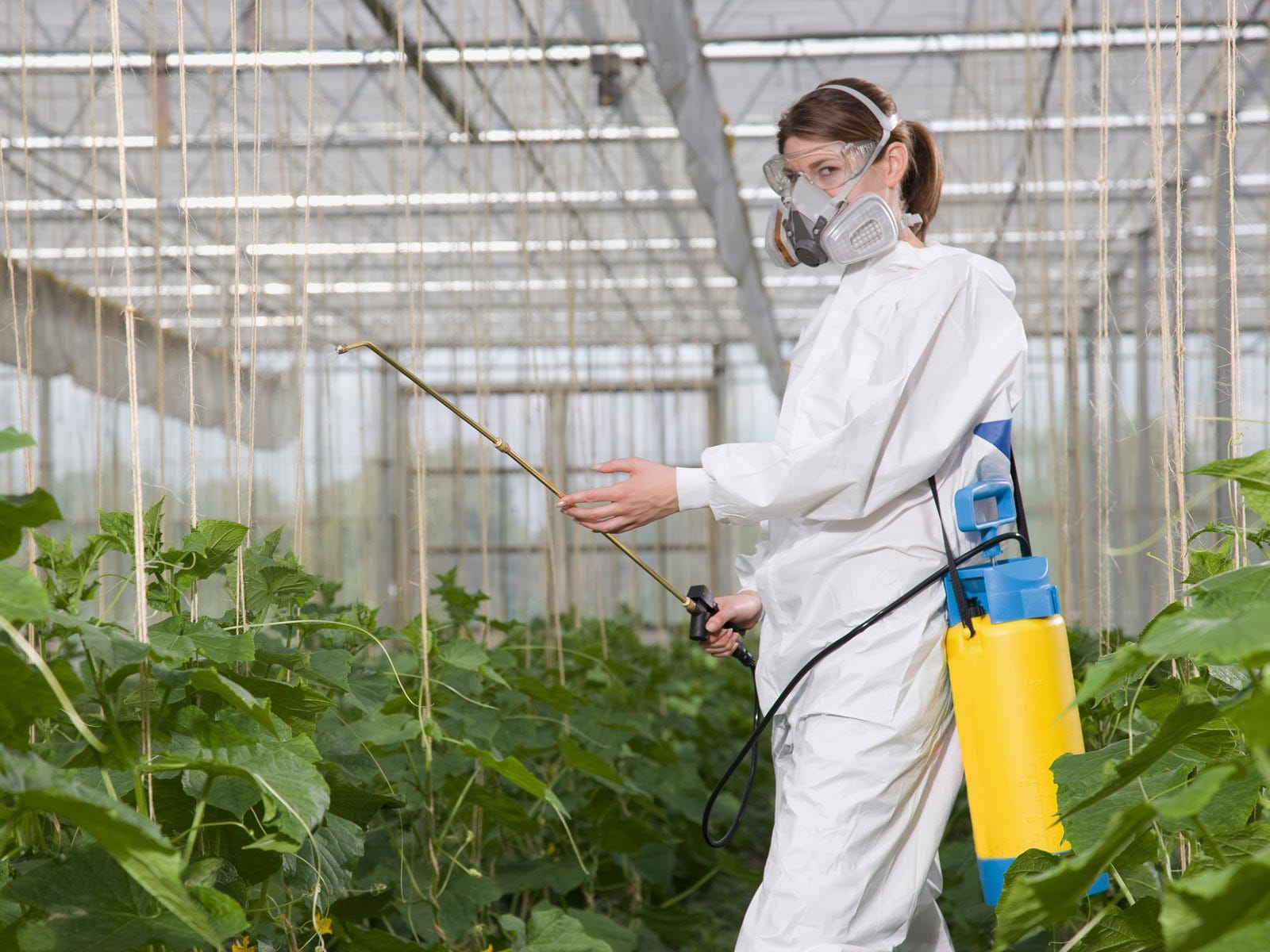 Опрыскивание растений химикатами