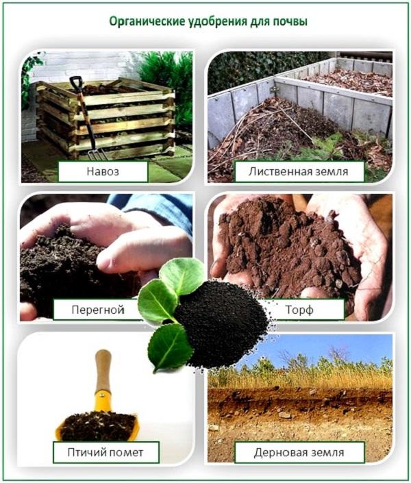 Органические удобрения для теплицы