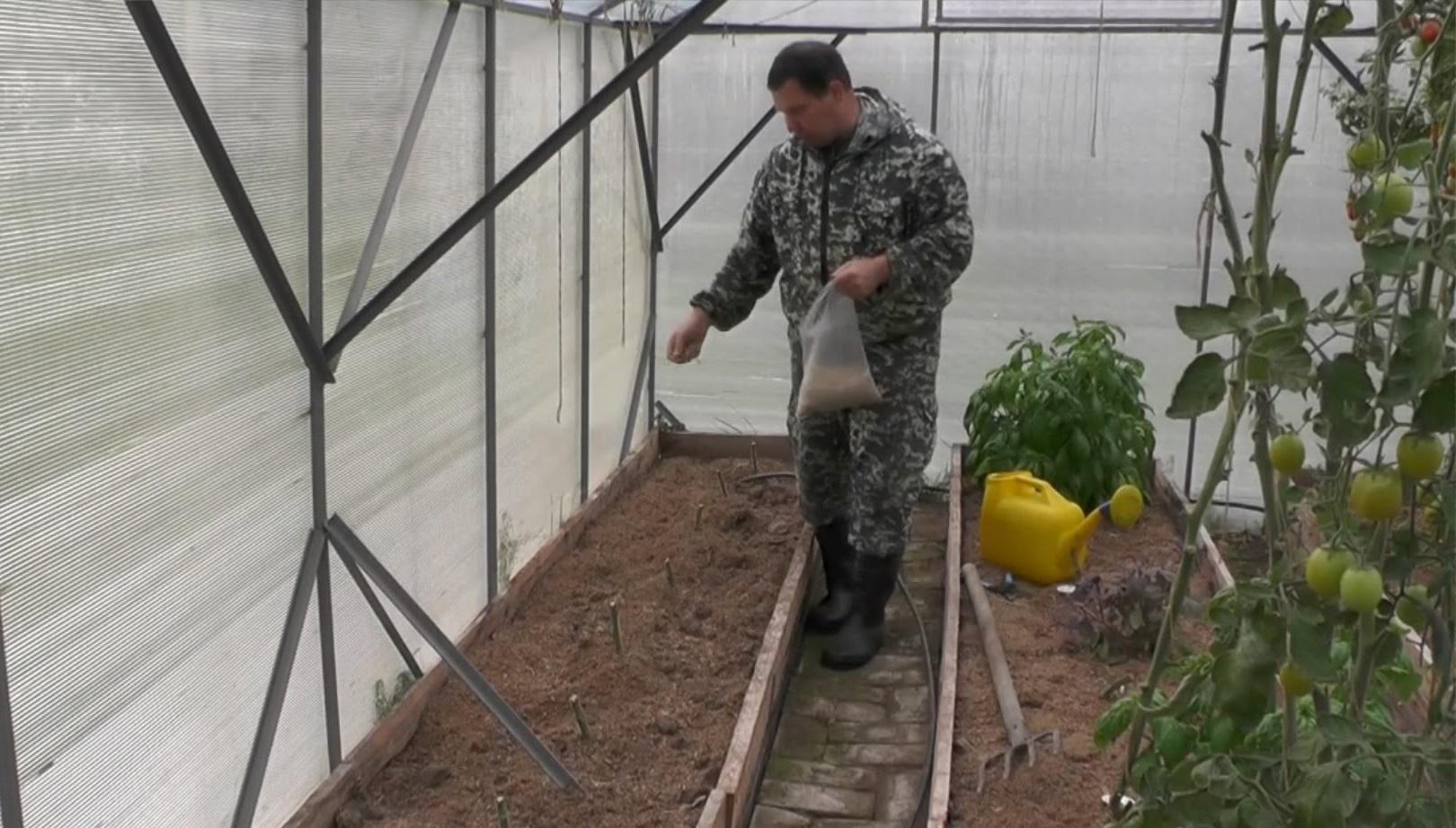 Осенние работы в теплице после уборки томатов
