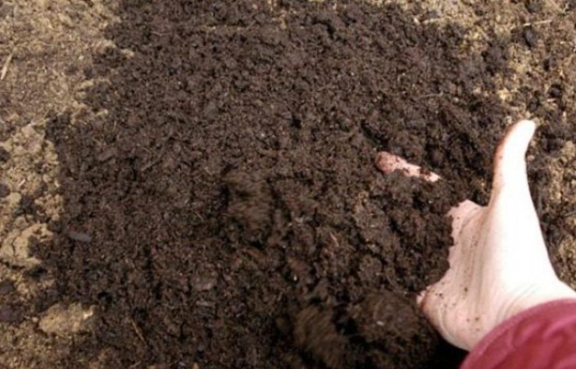 Осенью рекомендуется вынести почву из теплицы