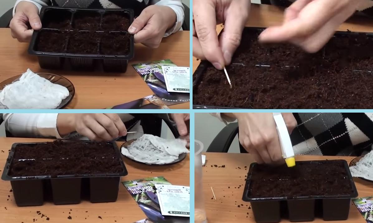 Посев семян в кассеты