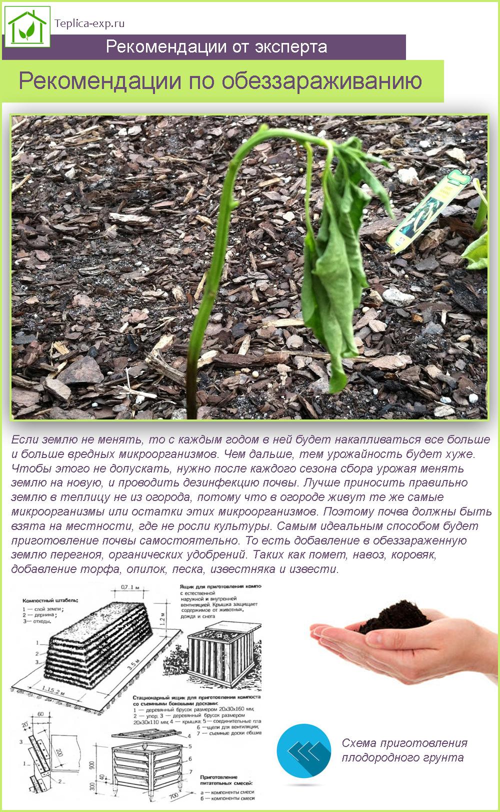 Рекомендации по обеззараживанию почвы в теплице