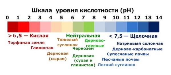 Шкала уровня кислотности (рН)