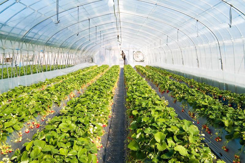 Теплица продлевает теплый сезон для растений
