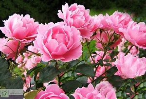 Какие цветы можно выращивать в теплице круглый год?