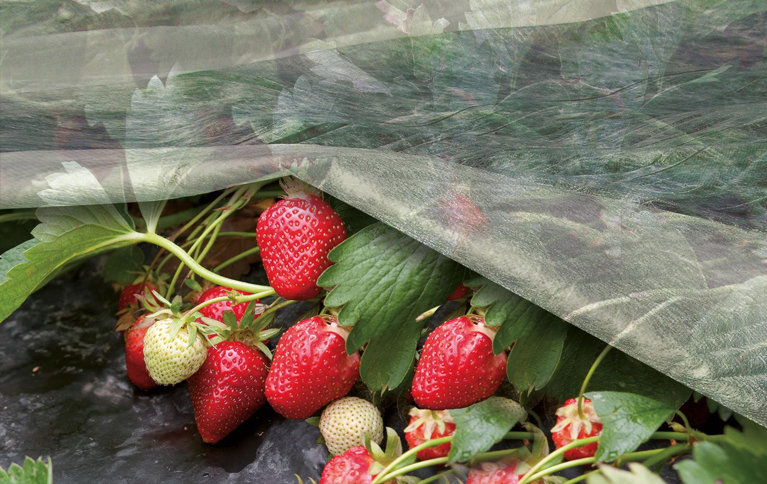 Агроволокно Ortoclima Italia