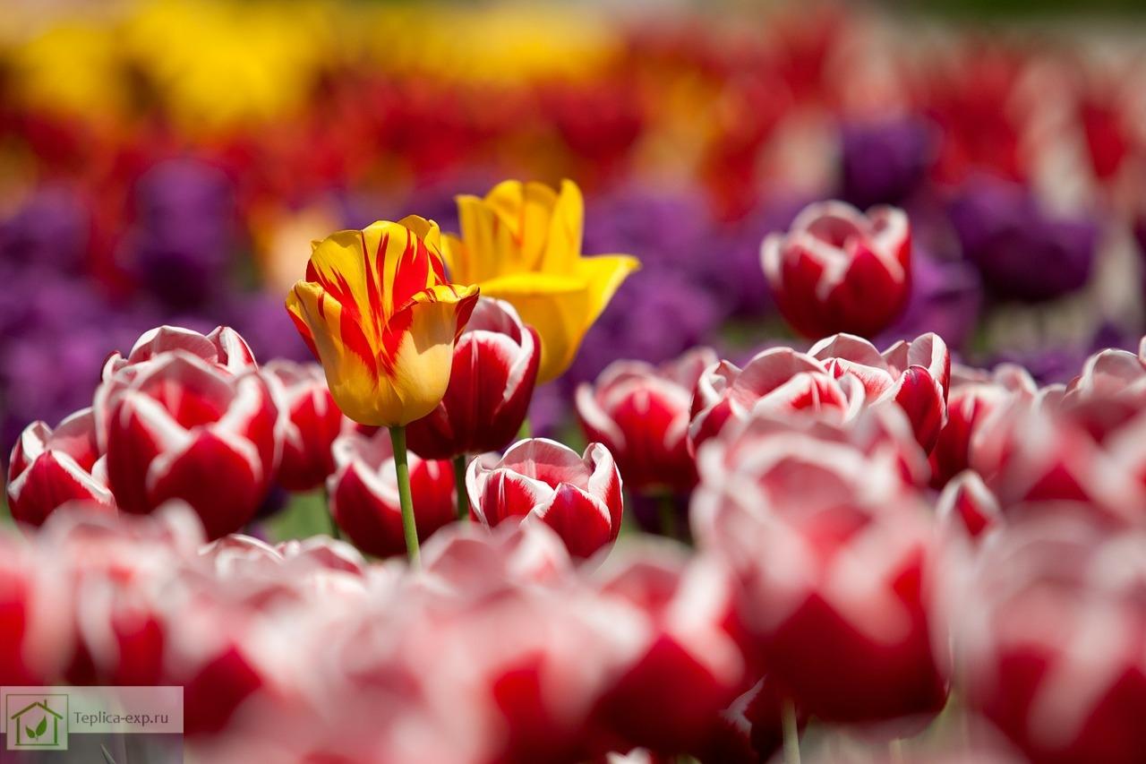 Цветочный бизнес считается одним из самых надежных