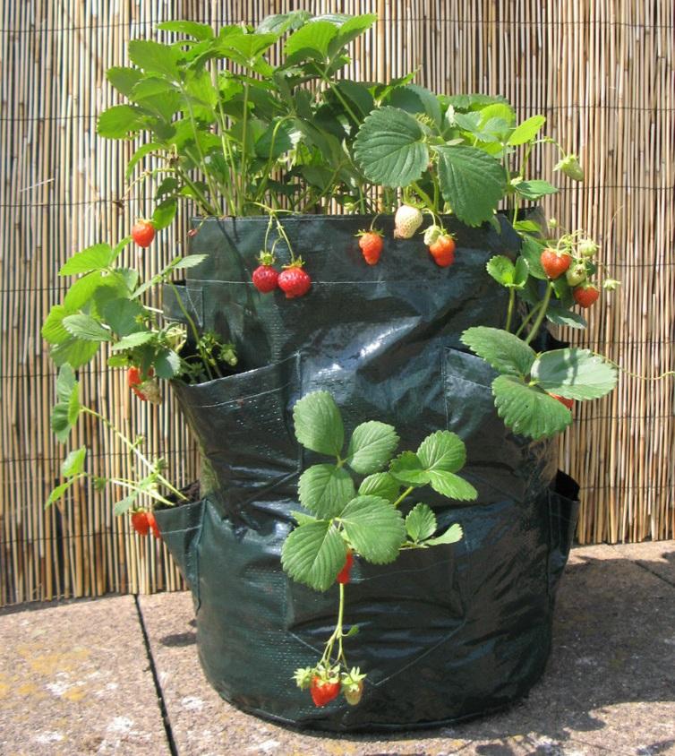 Еще один вариант мешка для выращивания клубники