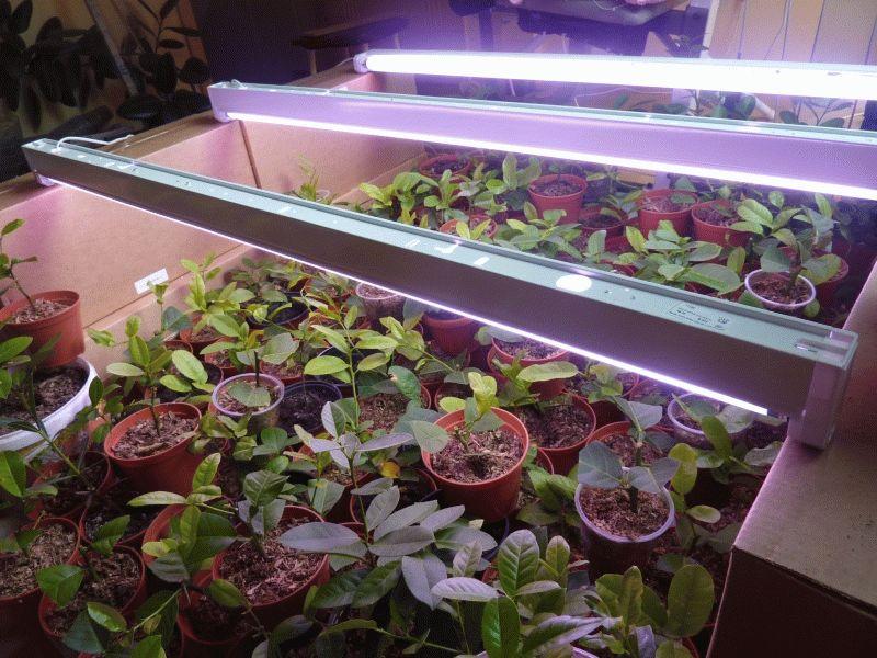 Фитолампы для подсветки растений