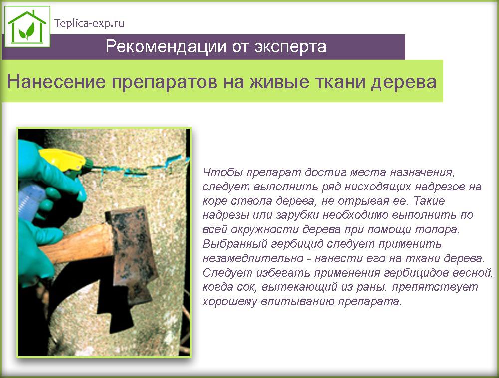 Нанесение препаратов на живые ткани дерева