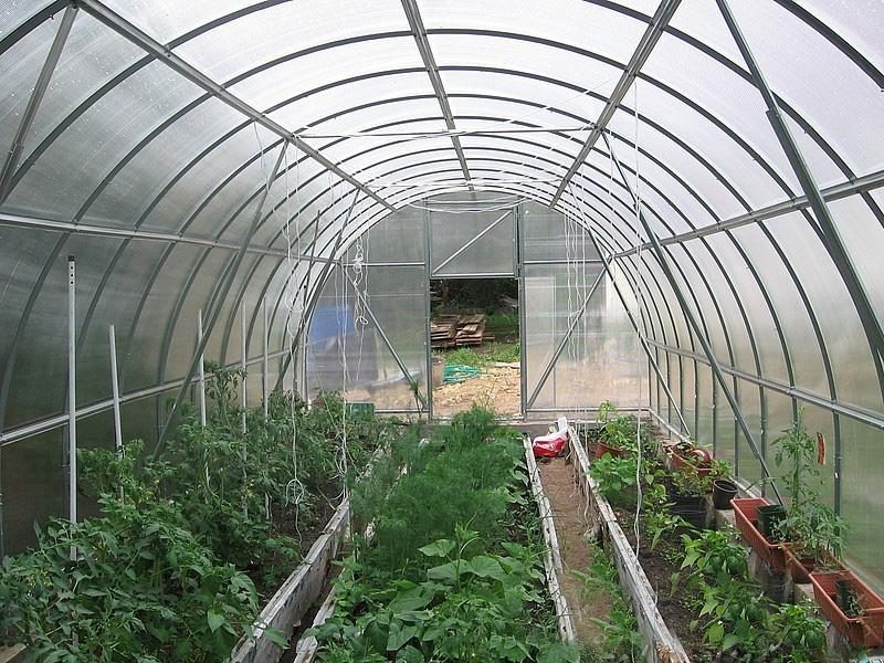 Низкорослые растения в теплице не должны оказаться в тени от высокорослых