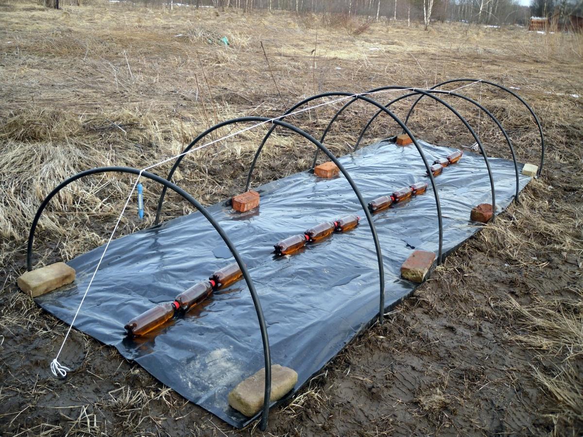 Органическое удобрение можно накрыть черной пленкой на неделю (на фото - мини-парник)