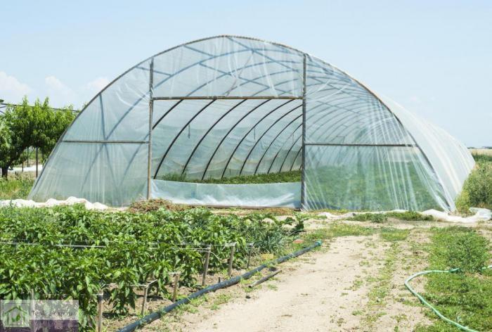Полупромышленная фермерская теплица (пленочная)
