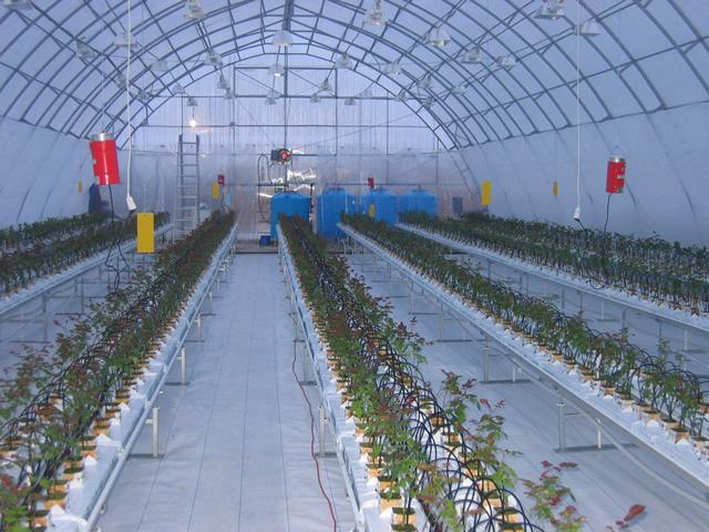Промышленная ангарная теплица с системами поддержания микроклимата