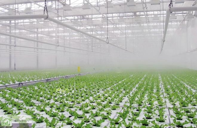 Работа системы туманообразования