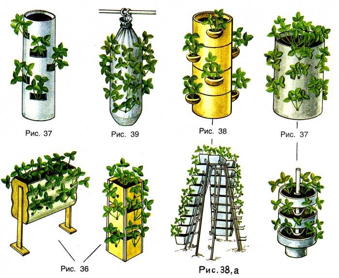 Разновидности вертикального способа выращивания клубники