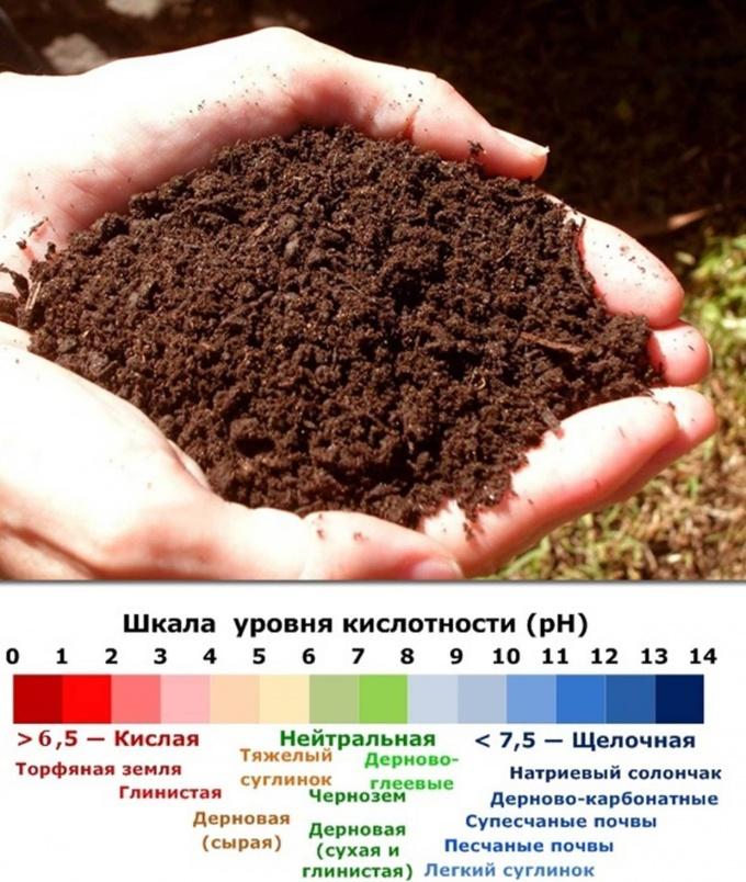 Шкала уровня кислотности почвы