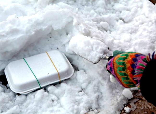 Стратификация семян в снегу