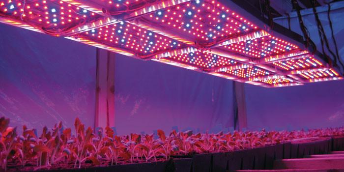 Светодиодные фито-светильники в теплице