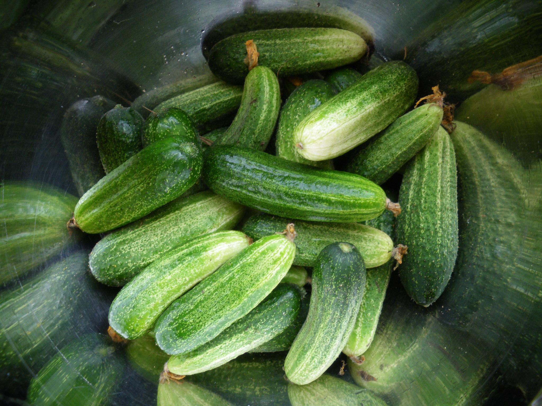 Внешне плоды гибридов не отличаются от плодов обычных сортов