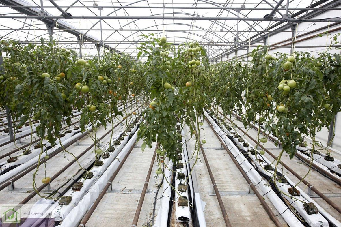 Водяное отопление фермерской теплицы