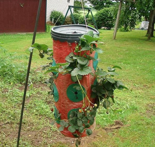 Возможный вариант - приспособление для выращивания клубники Topsy Turvy Strawberry Planter