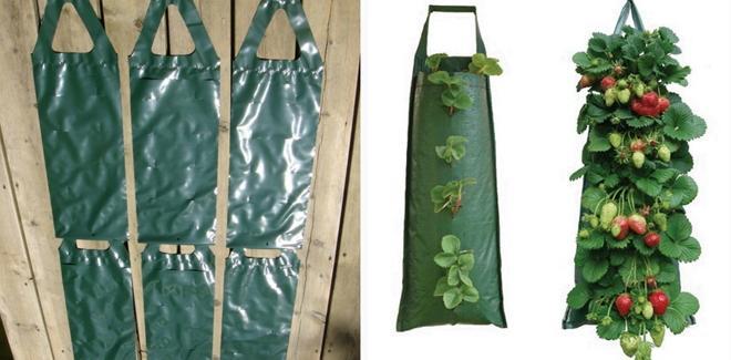 Выращивание клубники в ПЭТ мешках