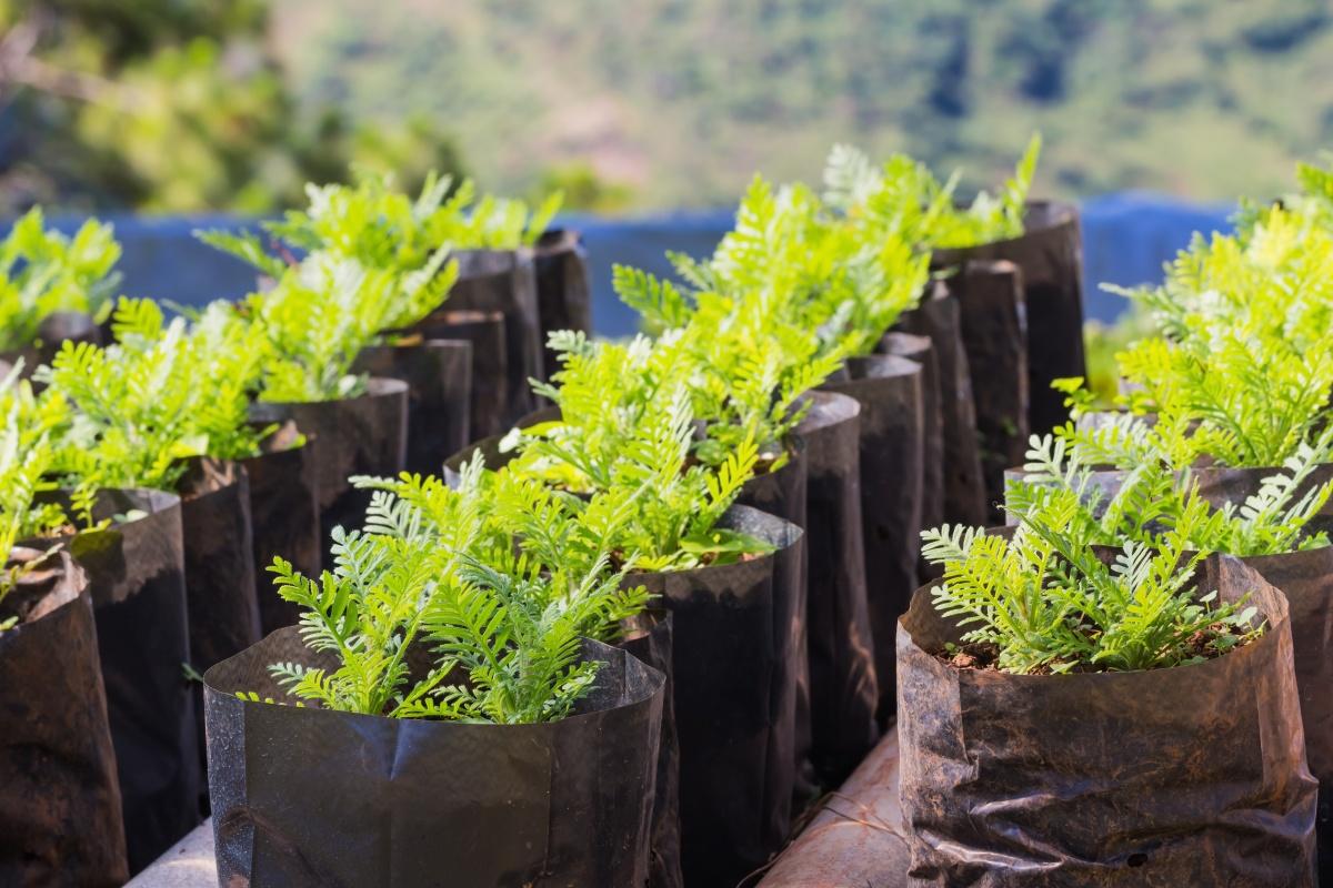 Выращивание рассады в ПЭТ пакетах