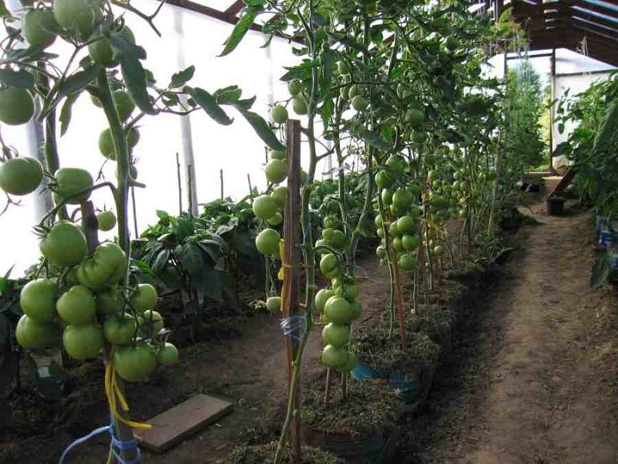 За растениями в ведрах удобно ухаживать