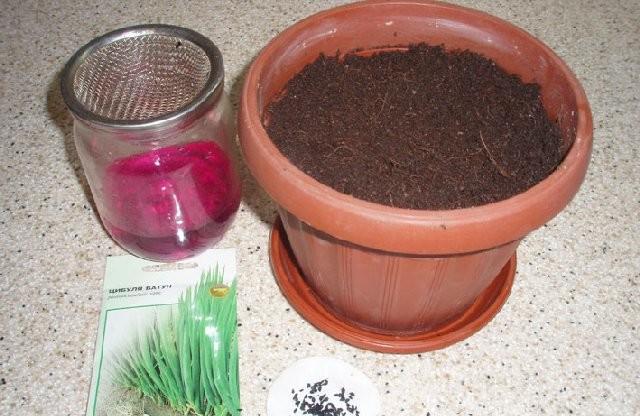 Замочите семена в марганцовке для обеззараживания