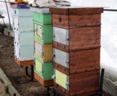 Зимовка пчел в теплице из поликарбоната
