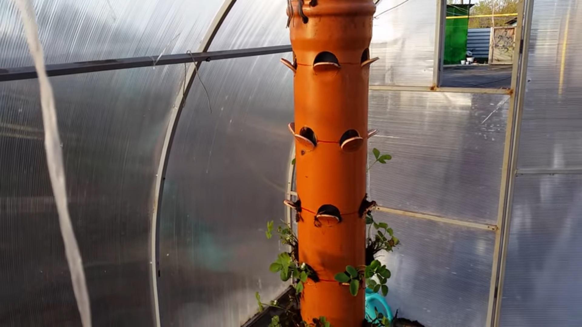 Выращивание клубники в ПВХ трубе вертикальным способом
