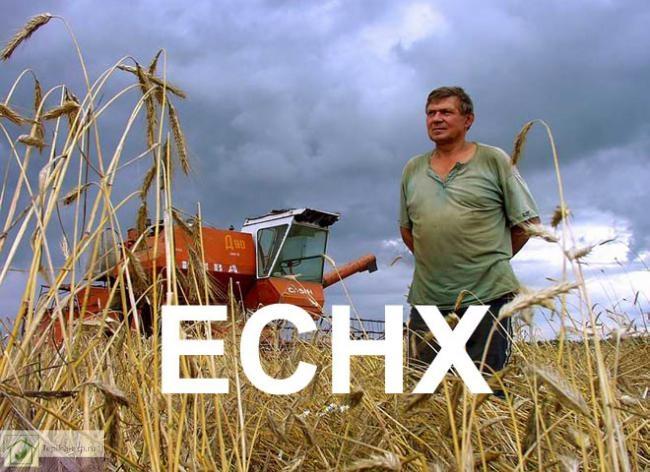ЕСХН (Единый сельскохозяйственный налог) — замена уплаты налога на прибыль организаций, НДС (за исключением налога, подлежащего уплате в соответствии с НК и ТК РФ) и налога на имущество организаций и страховых взносов