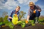 Календарь садовода на июнь