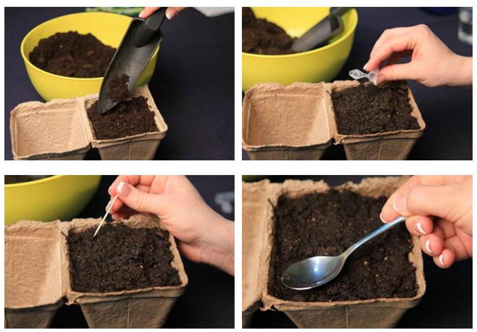 Семена бегонии можно вообще не присыпать, а лишь немного вдавить в землю мокрой чайной ложкой. Когда появятся первые всходы, бегонию нужно будет поливать под корень теплой водой из пипетки, чтобы не обжечь нежные листья