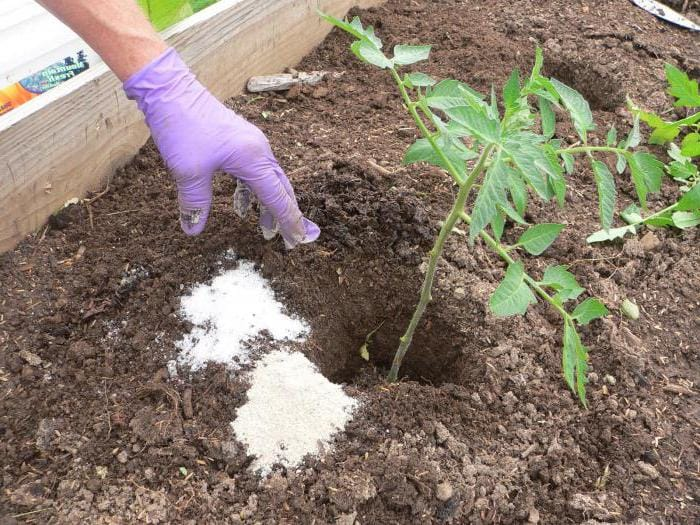 А вот подкармливать томаты весной и летом надо только сульфатом калия. Нормы подкормки указываются на упаковке. Обычно это от 15 до 20 г калия на м.кв.