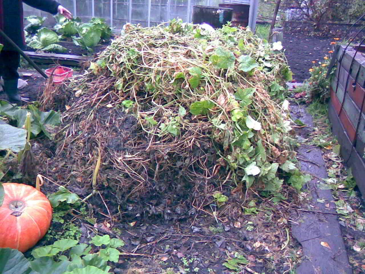 Ботва и растительные остатки для компоста