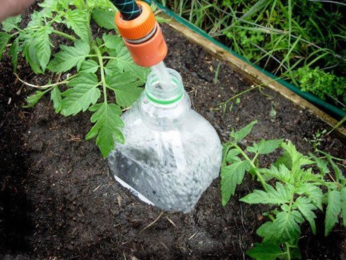 Бутылка, закопанная горлышком вверх