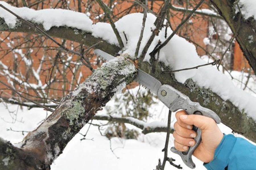 Используйте для обрезки исправный и наточенный инструмент