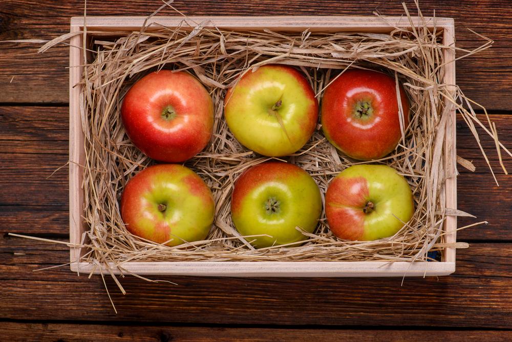 Хранение яблок в соломе