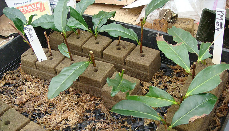 Как сделать торфяные кубики для рассады