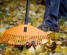 Календарь садовода на октябрь