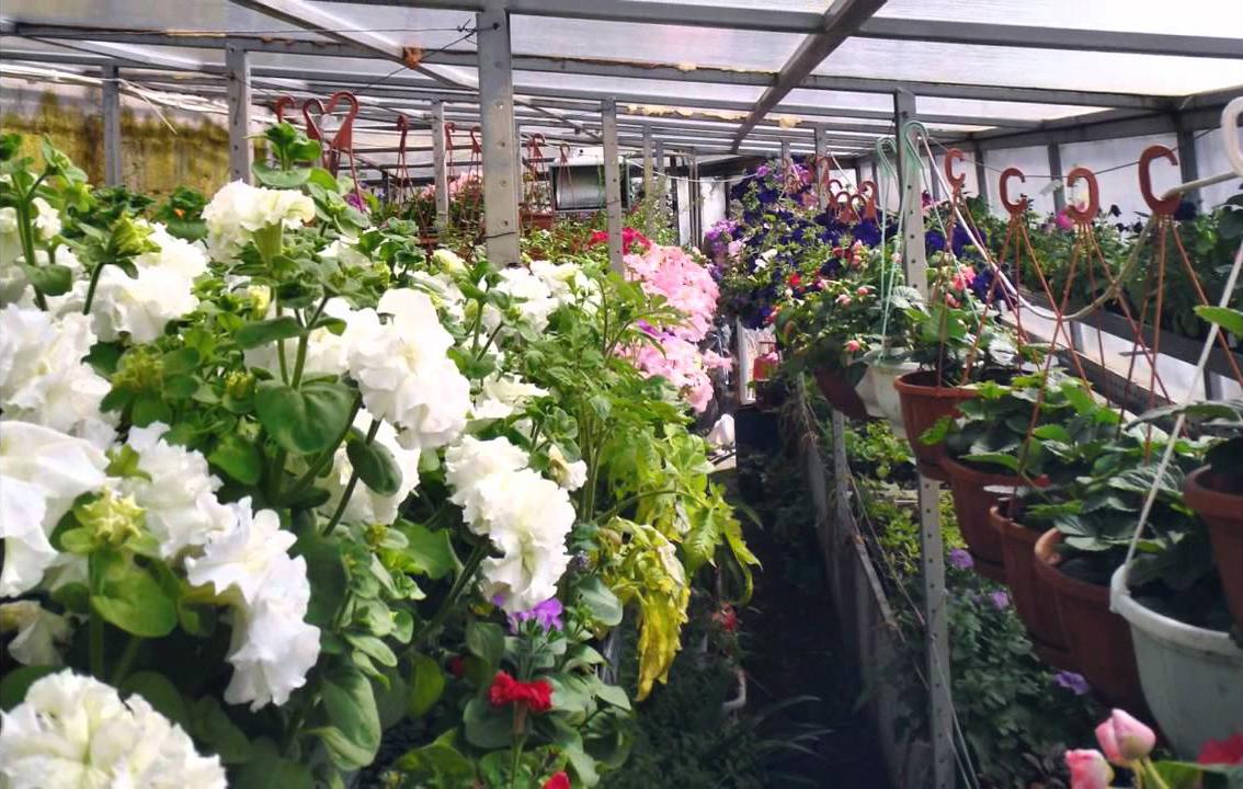 Многолетние цветы в контейнерах и горшках в зимней теплице