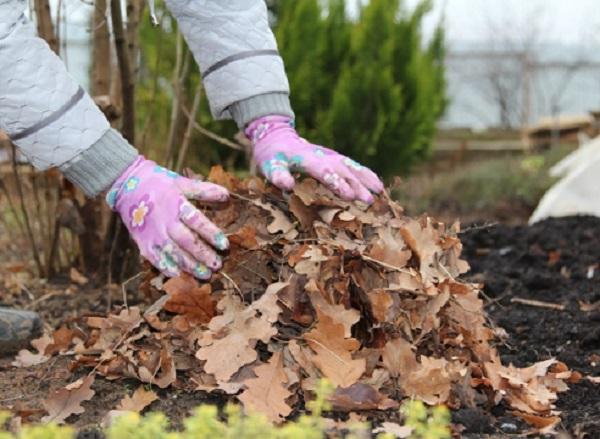 Мульчирование клумб сухой листвой