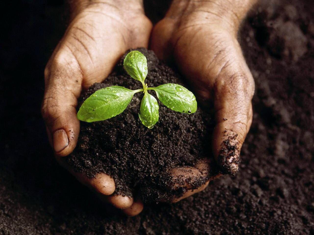 Наличие калия в почве очень важно для растений