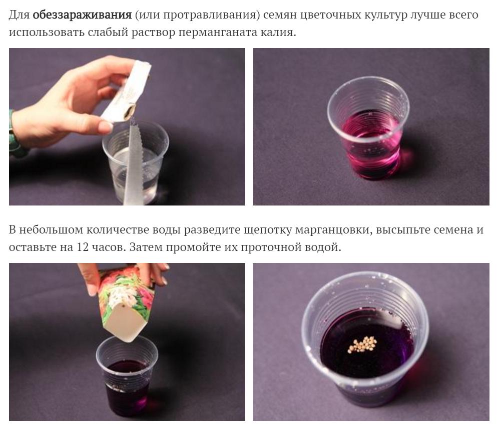 Обеззараживание семян с помощью марганцовки